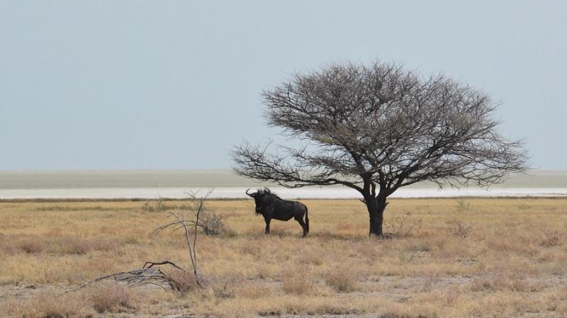 namibija-in-bocvana-2016-2485