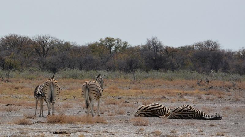 namibija-in-bocvana-2016-2493