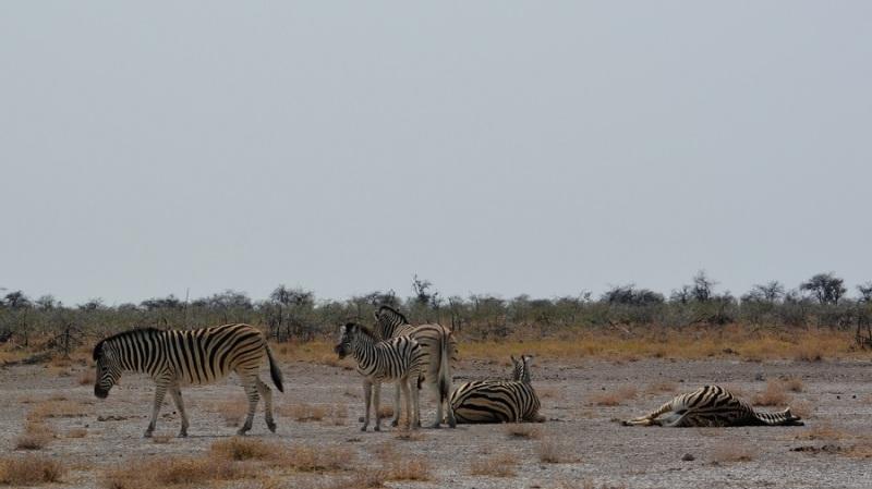 namibija-in-bocvana-2016-2496