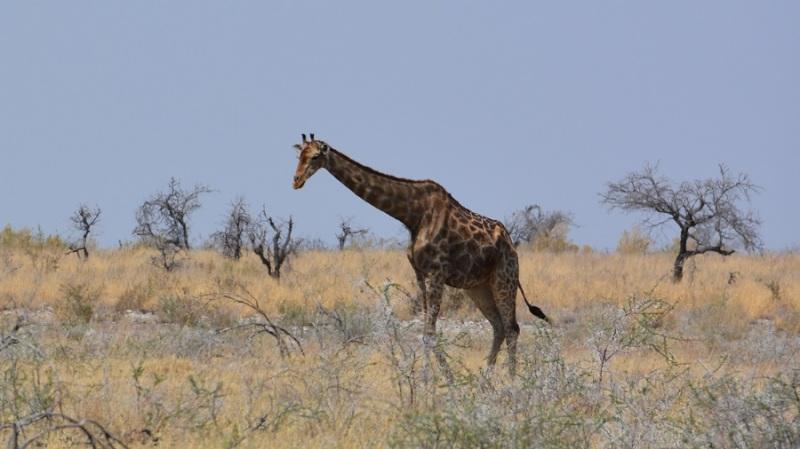 namibija-in-bocvana-2016-2507