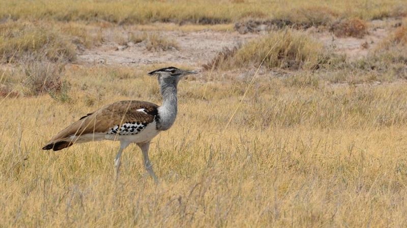 namibija-in-bocvana-2016-2514