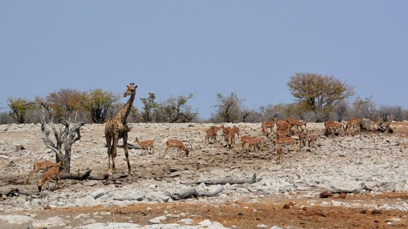 namibija-in-bocvana-2016-2517