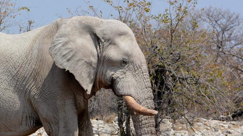 namibija-in-bocvana-2016-2528