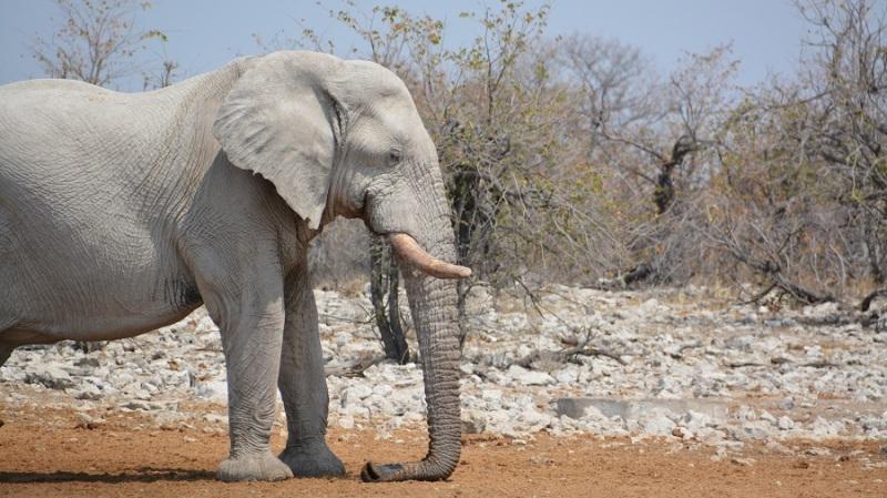 namibija-in-bocvana-2016-2529