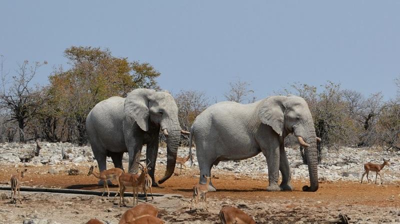 namibija-in-bocvana-2016-2531