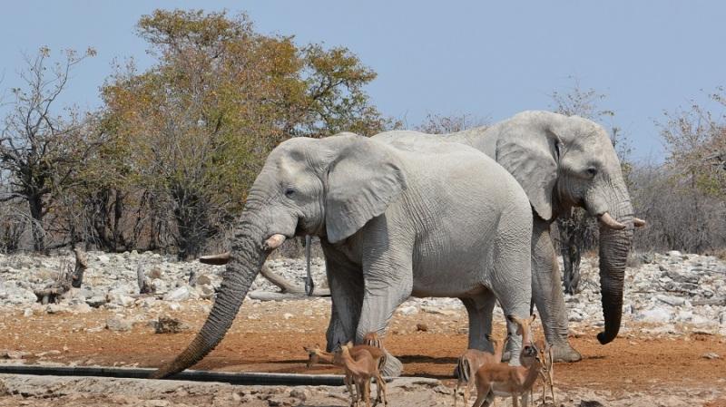 namibija-in-bocvana-2016-2537