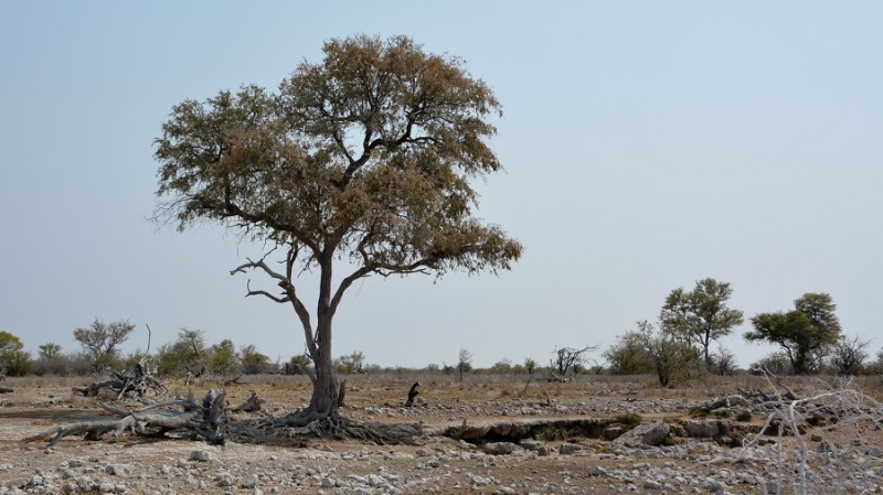 namibija-in-bocvana-2016-2560
