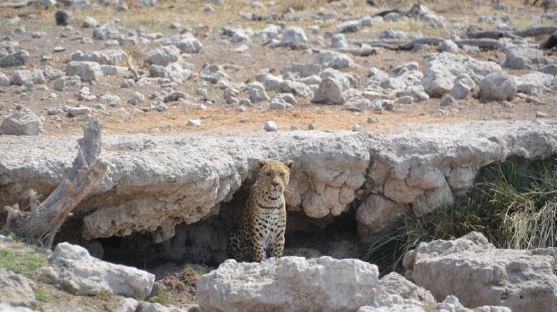 namibija-in-bocvana-2016-2566