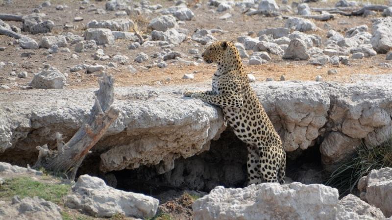 namibija-in-bocvana-2016-2572