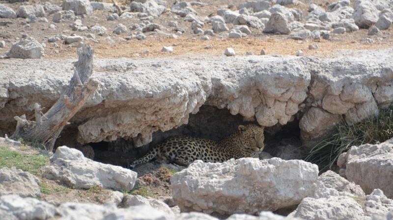 namibija-in-bocvana-2016-2573