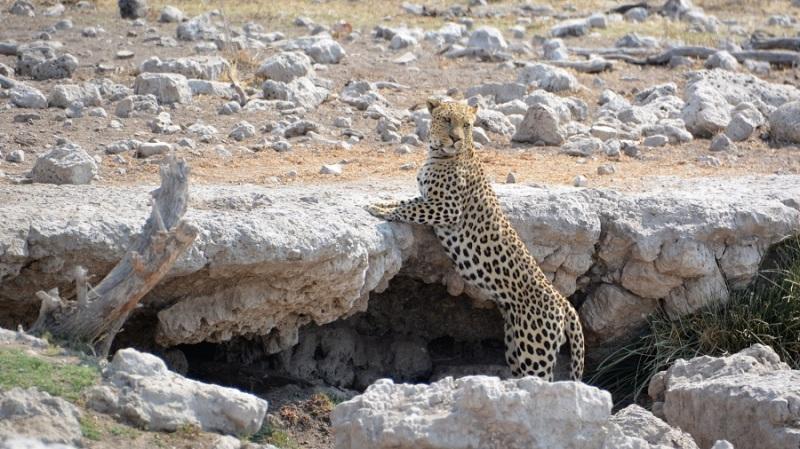 namibija-in-bocvana-2016-2591