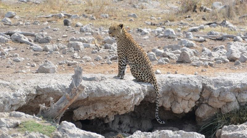 namibija-in-bocvana-2016-2593