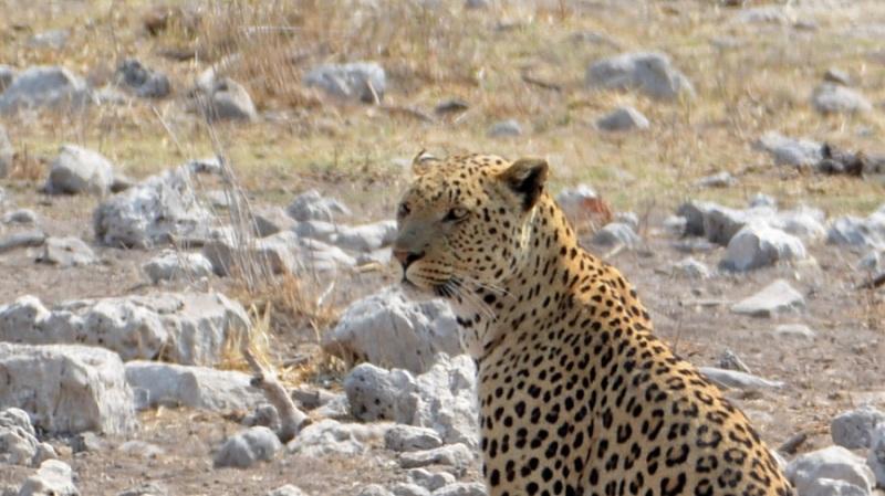 namibija-in-bocvana-2016-2594