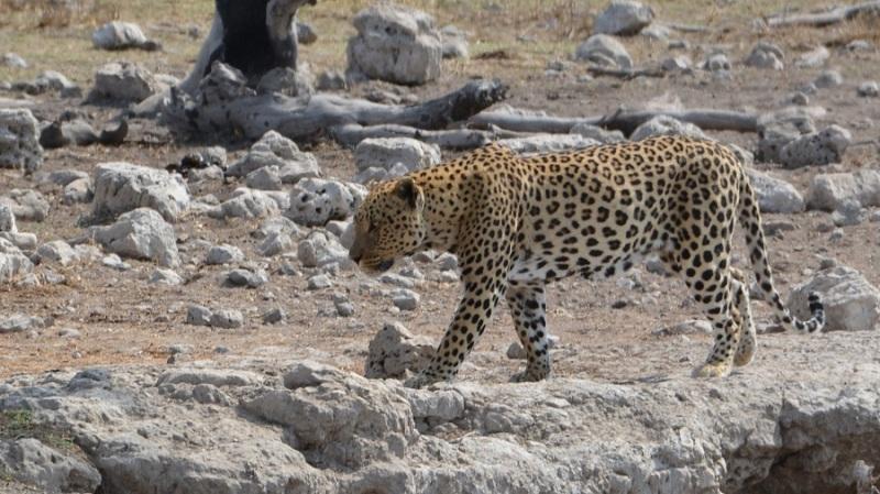 namibija-in-bocvana-2016-2602