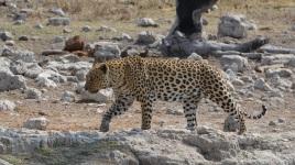 namibija-in-bocvana-2016-2603