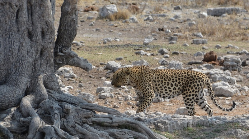 namibija-in-bocvana-2016-2604