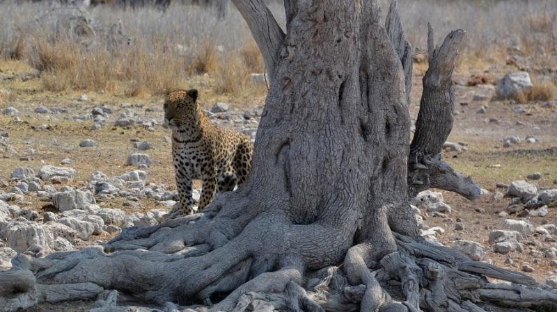 namibija-in-bocvana-2016-2607