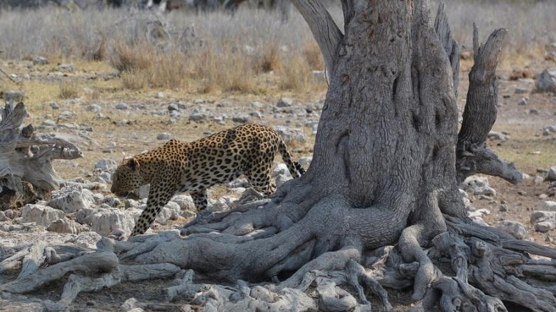 namibija-in-bocvana-2016-2609