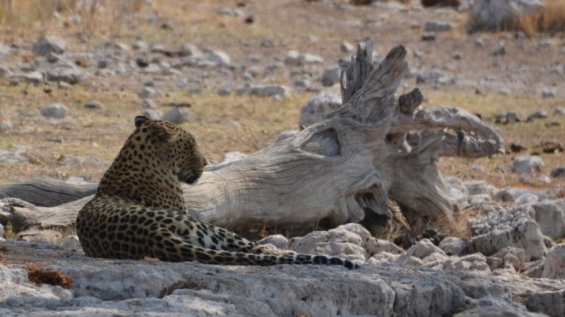 namibija-in-bocvana-2016-2612