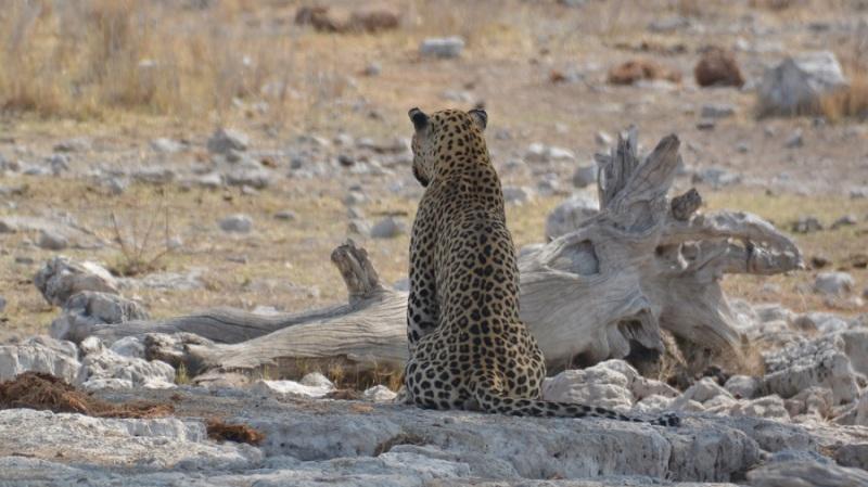 namibija-in-bocvana-2016-2613