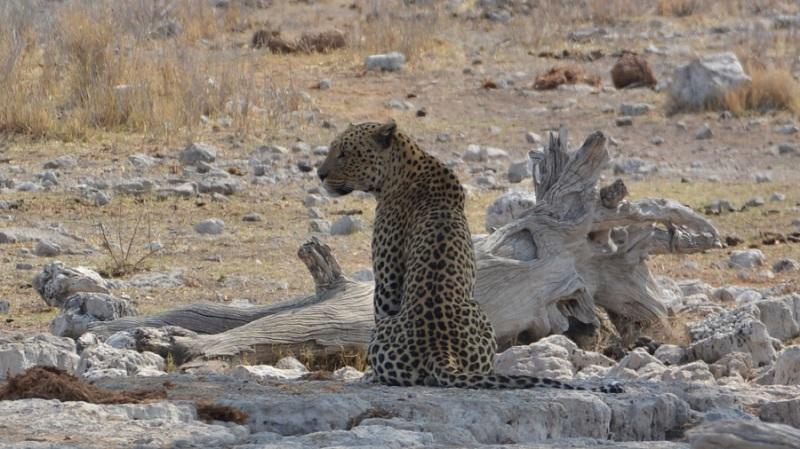 namibija-in-bocvana-2016-2621