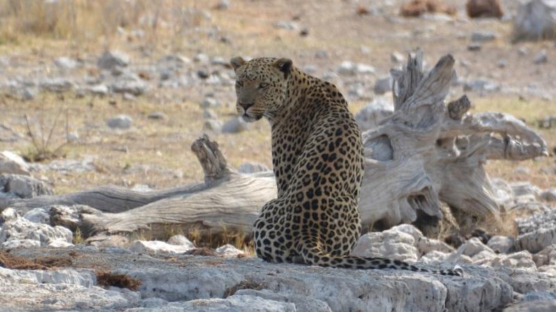 namibija-in-bocvana-2016-2626