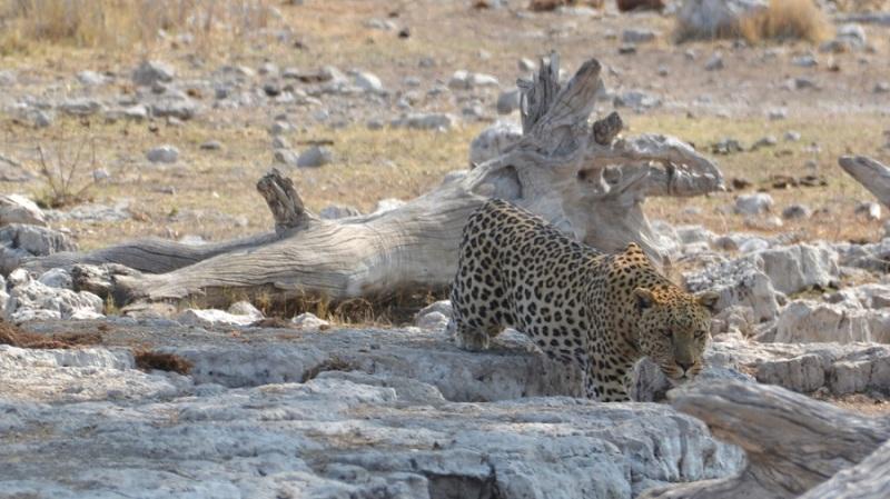 namibija-in-bocvana-2016-2628