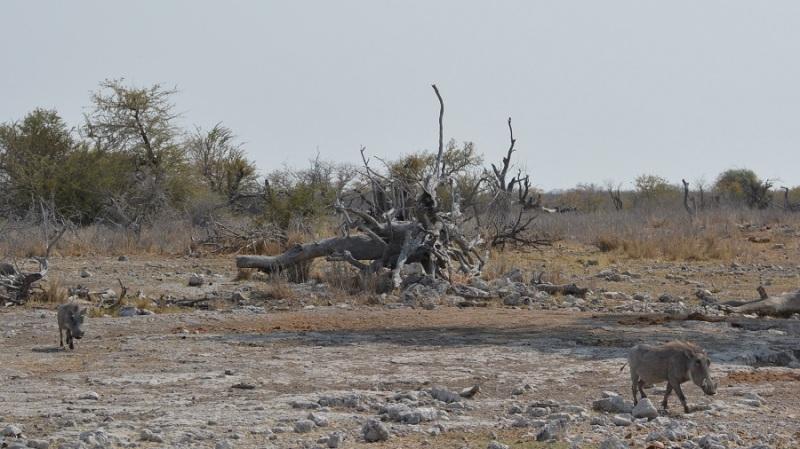 namibija-in-bocvana-2016-2631