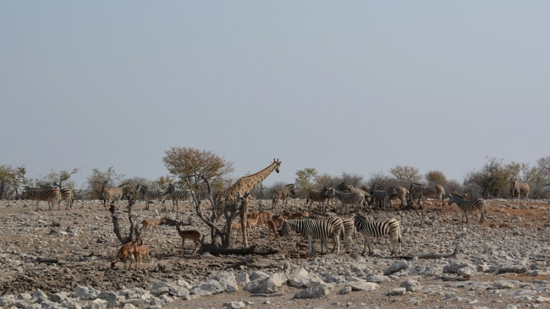 namibija-in-bocvana-2016-2636