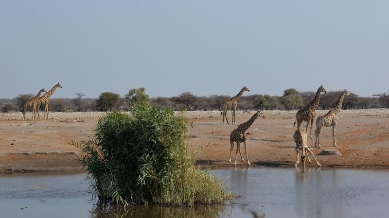 namibija-in-bocvana-2016-2640