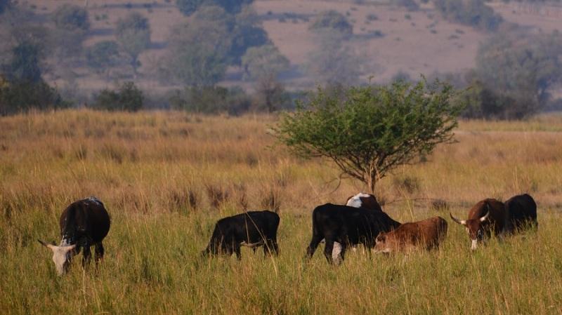 namibija-in-bocvana-2016-2696