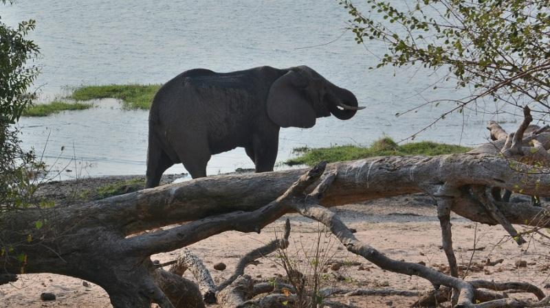 namibija-in-bocvana-2016-2765