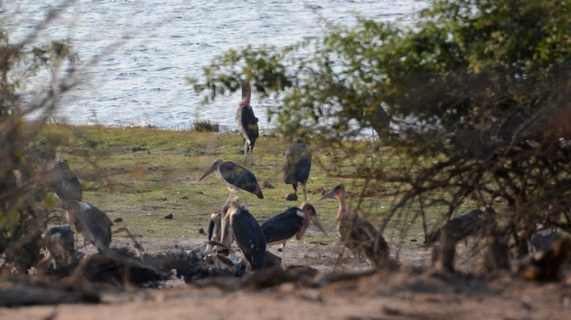 namibija-in-bocvana-2016-2771
