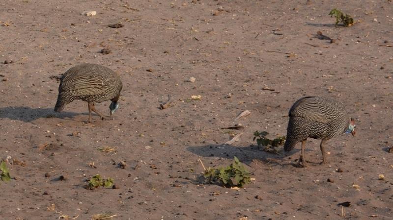 namibija-in-bocvana-2016-2806