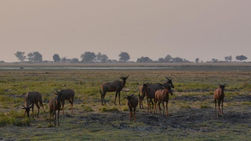 namibija-in-bocvana-2016-2872