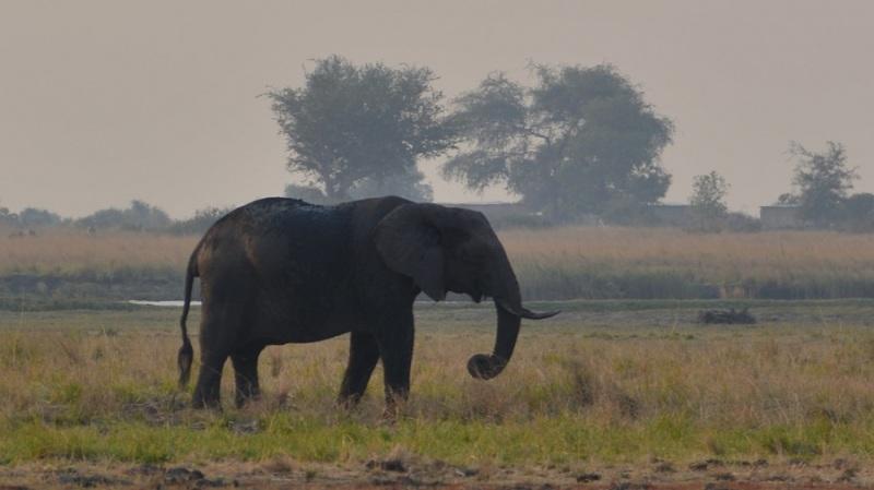 namibija-in-bocvana-2016-2884