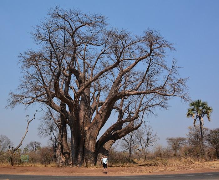 namibija-in-bocvana-2016-3132