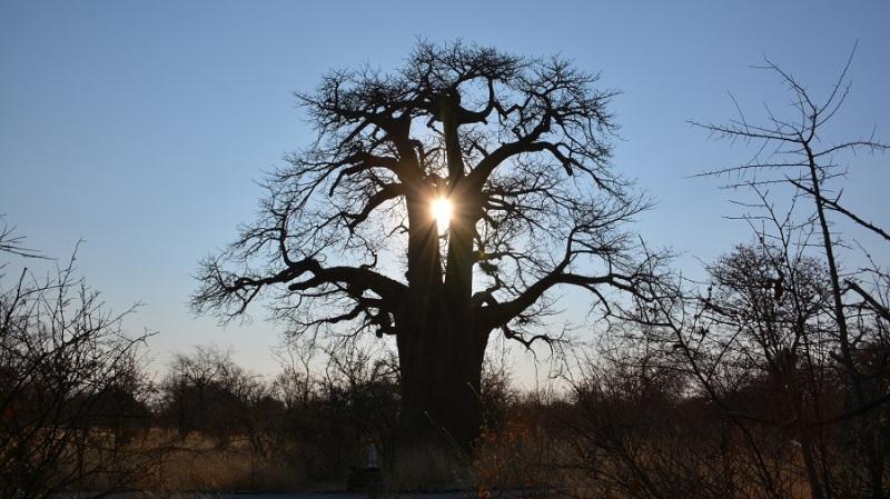 namibija-in-bocvana-2016-3191