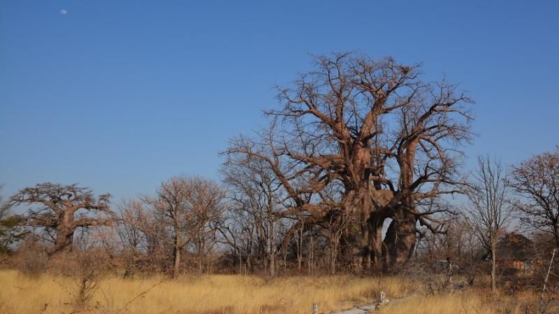 namibija-in-bocvana-2016-3197