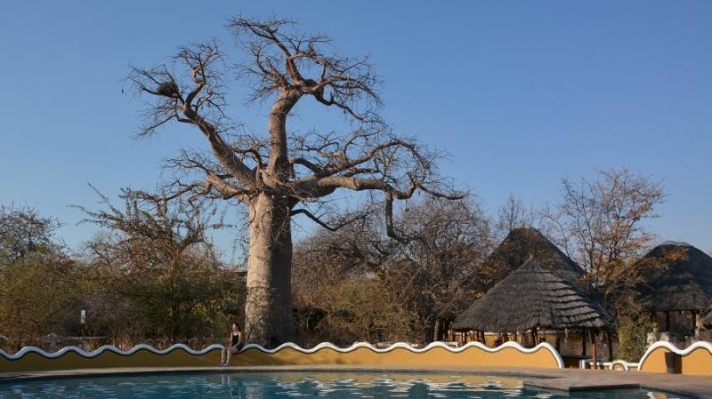 namibija-in-bocvana-2016-3201