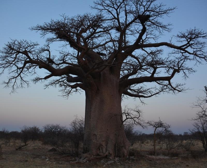 namibija-in-bocvana-2016-3240