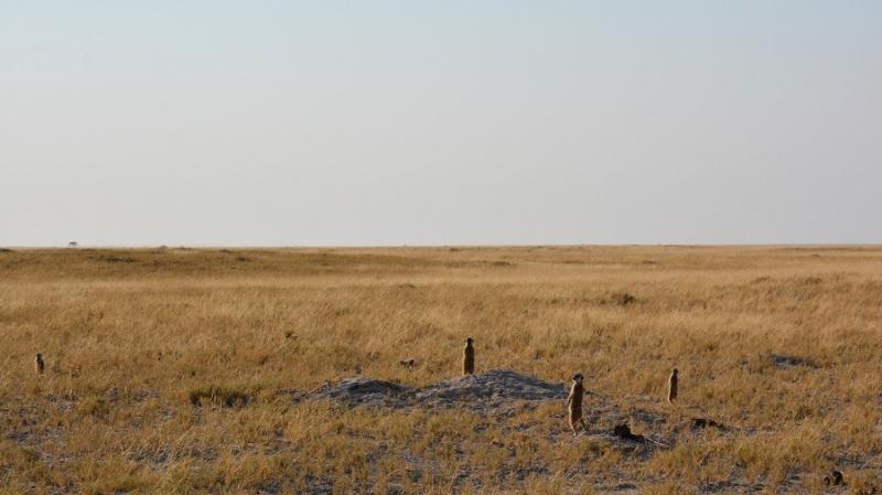 namibija-in-bocvana-2016-3253