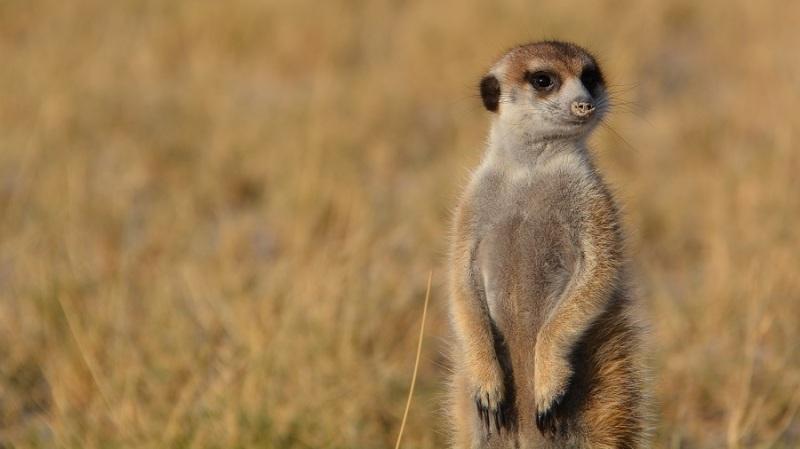 namibija-in-bocvana-2016-3262