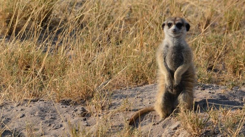 namibija-in-bocvana-2016-3270