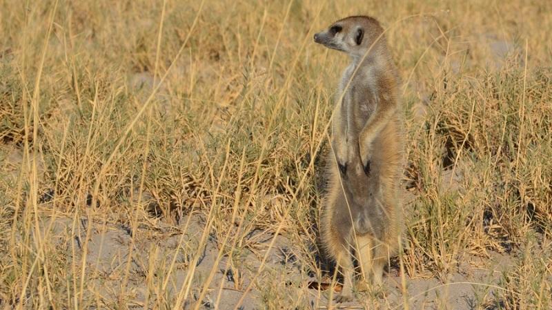 namibija-in-bocvana-2016-3289