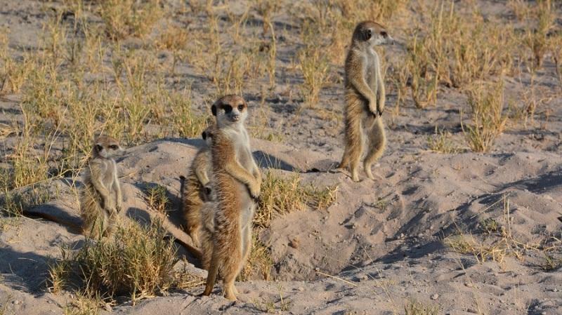 namibija-in-bocvana-2016-3293
