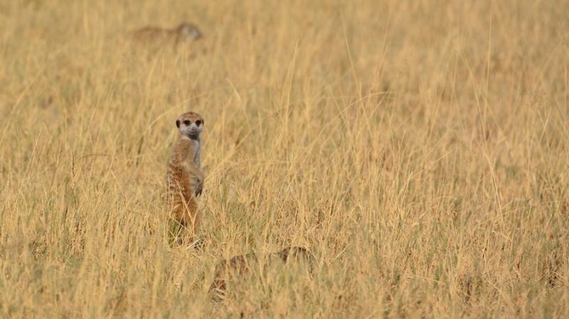 namibija-in-bocvana-2016-3328