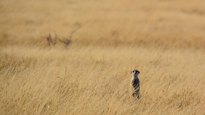 namibija-in-bocvana-2016-3339