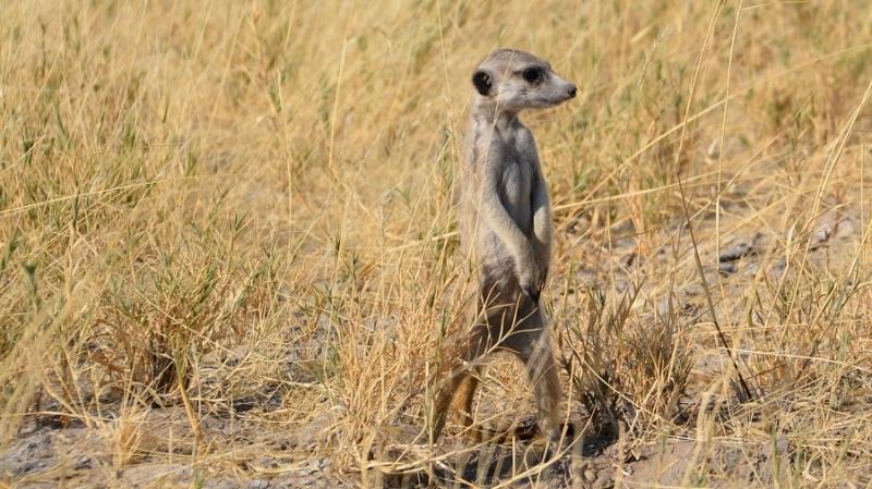 namibija-in-bocvana-2016-3402