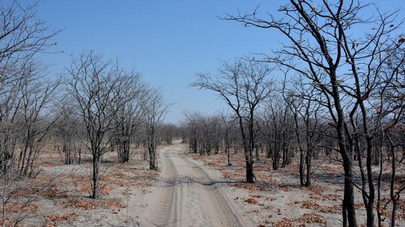 namibija-in-bocvana-2016-3469